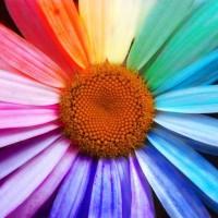 20101115-warna-kehidupan_200_200